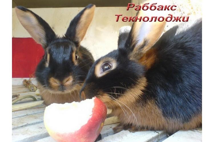 Кролики акселераты